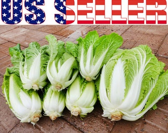 150+ ORGANIC Michihili Chinese Celery Cabbage Seeds Napa Heirloom NON-GMO Choy