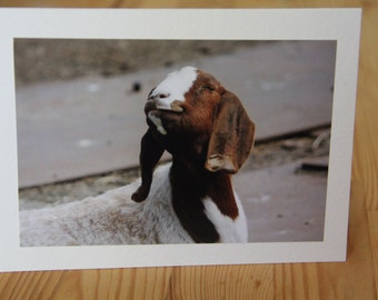 Happy Goat Card. Smiling Goat Photo. Cheering Up Card. Hummorous Card. Funny Photo Card. Goat Photography. Happy Animal. Cute Goat Card.