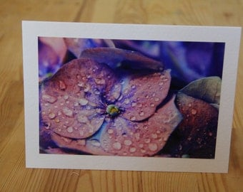 Vibrant Purple Flower After the Rain Card. Bright purple flower photo. Pretty flower card. Purple flower card. Flower photo notecard..
