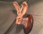 Faux taxidermy mounted jackalope, needle felted mohair
