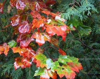 "Fine Art Photography, Landscape, Fall, Season,Nature,8X12"" or 16x24"", Autumn colors"