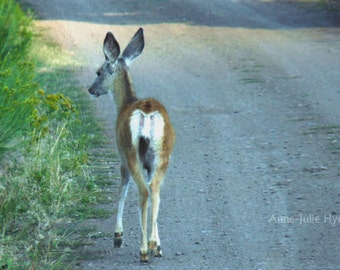 "Fine Art Photography, animal,fauna,8X12"" or 16x24"",Deer on the road"