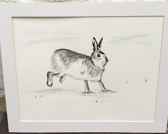 Mountain Hare ink sketch