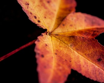 Red and Yellow Leaf - Macro Photography