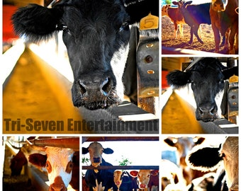 Cow Photos Set of 5 Art Print Home Wall Decor Farm Ranch Dairy Country High Resolution Pictures Digital Instant Download