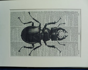 Stag Beetle Print No.296, stag beetle wall art, beetle print, insect art, insect print, insect poster, beetle