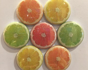 Citrus Magnets - set of 7
