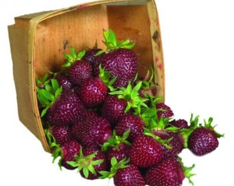Strawberry Seeds - PURPLE Wonder - Extra Sweet Fruit - GMO FREE - 25 Seeds