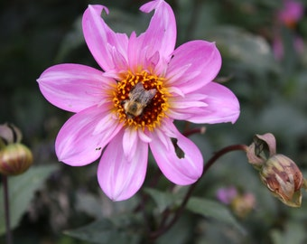 Purple Flower with a wasp