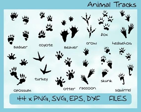 Animal Tracks Shoes Us