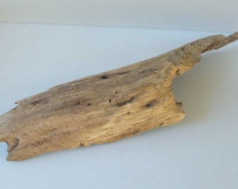 """Freshwater Driftwood from the Tennessee River Beaver Chew, 29"""" x 7.5"""" x 3 1/4"""""""