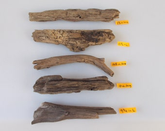 """Freshwater Driftwood from the Tennessee River, lot of 5 pieces, 9 3/4"""" - 13"""" long"""