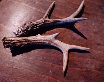 Deer and Roe deer horns