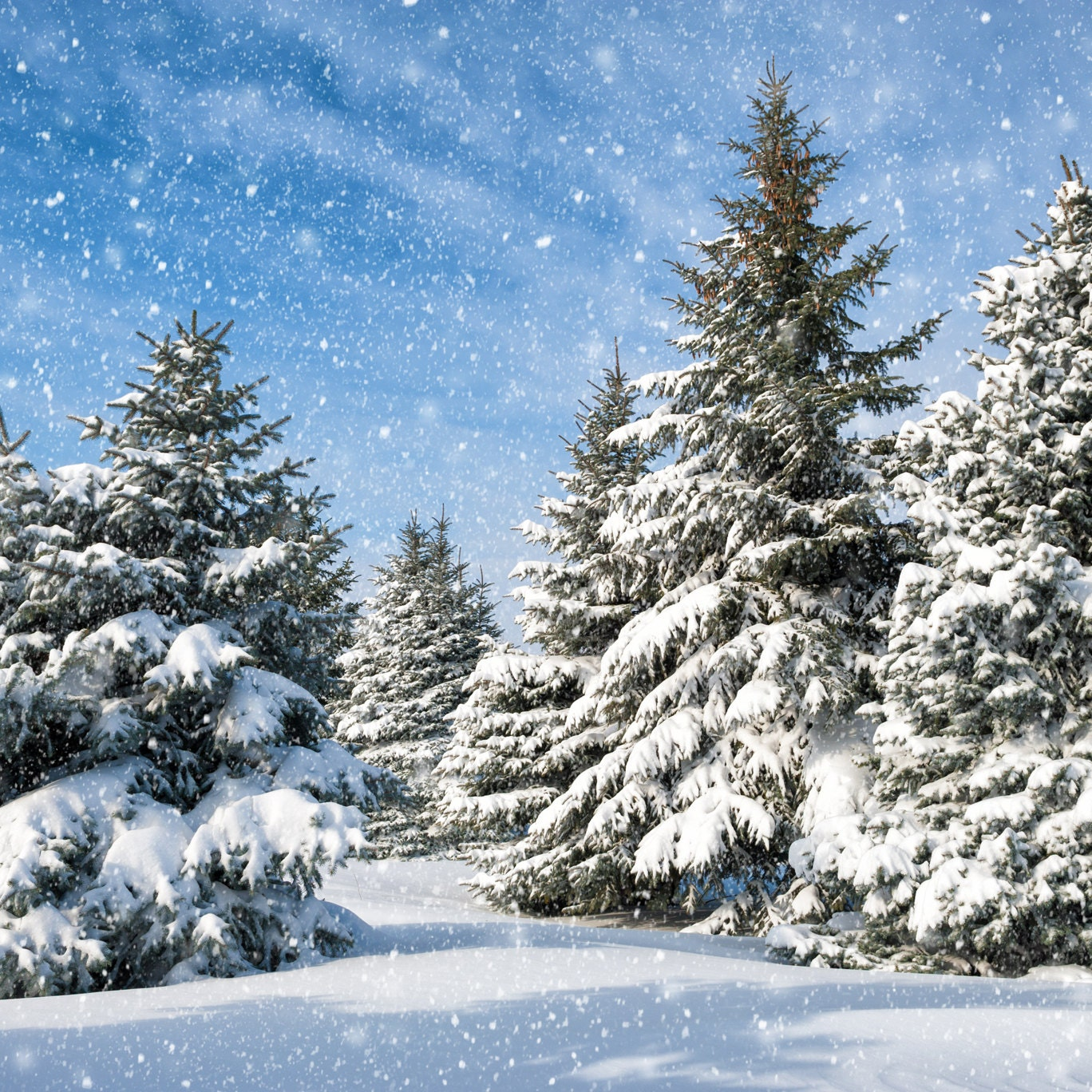 snow forest backdrop christmas tree white snow winter. Black Bedroom Furniture Sets. Home Design Ideas