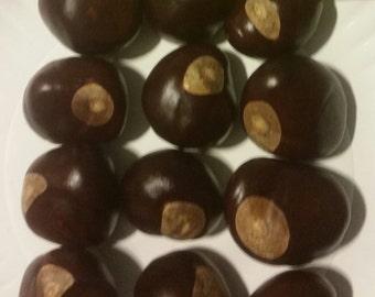 12 Large Buckeye Nuts Fresh 2015 Crop Southern Ohio State Buckeyes 1 1/4 to 1 1/2 inch Horse Chestnut