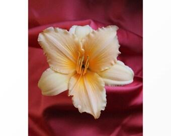Flower Wall Art | Shameless in Red Satin! Lily Flower Art Print