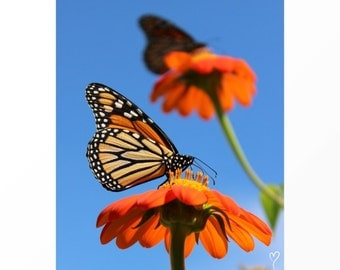 Orange Flowers and Butterfly Print, Butterfly Wall Art, Wall Art