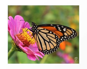 Butterfly Wall Art - Monarch Sipping From Pink Flower! Flower Fine Art Prints and Butterfly Art Prints.