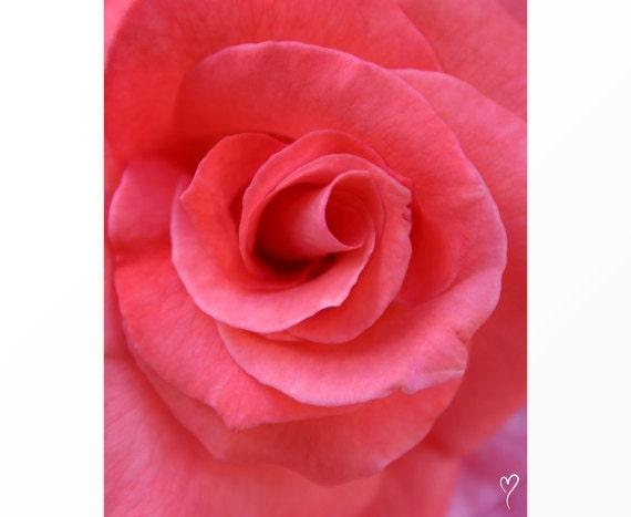 Pink Flower Art, Rose Art, Flower Art, Pink Rose Print, Flower Print, Flower Photography, Floral Decor