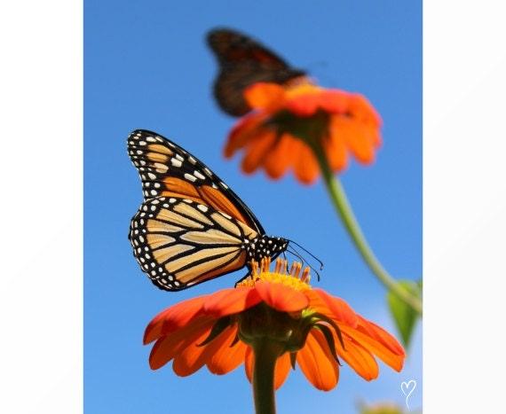 Orange Flowers and Butterfly Print, Butterfly Wall Art, Wall Art