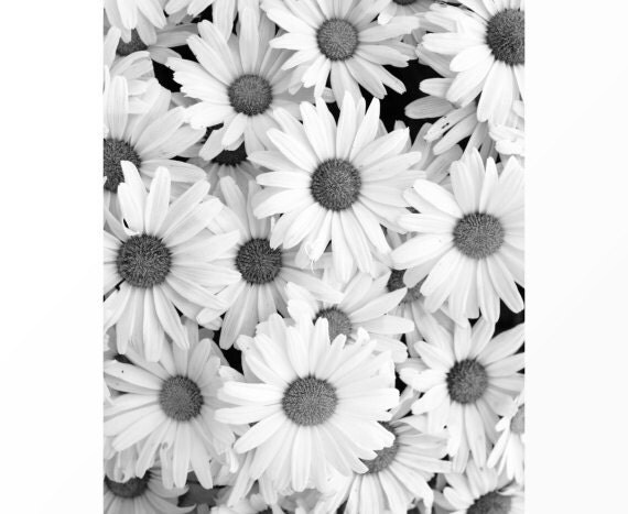 Black and White Photograph | We are Family! Daisies Flower Print, Black and White Wall Art.