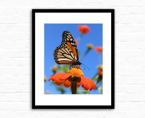 "Butterfly Art, Butterfly Wall Art, Butterfly Print, Flower Fine Art, Wall Art ""Monarch Sipping Sweet Goodness"""