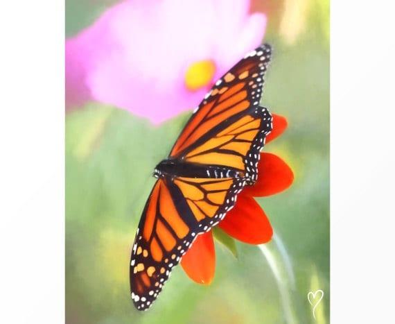 """Butterfly Art, Original Fine Art Print, Home Decor, Butterfly Wall Art, Gift for Mom, Wall Decor """"Monet's Monarch"""""""