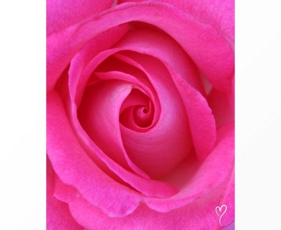 "Pink Photography, Floral Photograph, Pink Art Print, Pink Rose, MODERN HOME DECOR, Pink Decor, Pink Wall Art, Birthday Gift, ""Pink Love"""