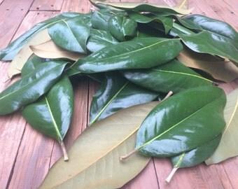 200 Magnolia Leaves