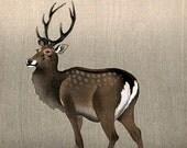 Japanese Fine Art Reproduction, Wall Art, Woodland Illustration, Ukiyo-e, Woodblock Print, Home Decor, Room Decor, Deer in Repose