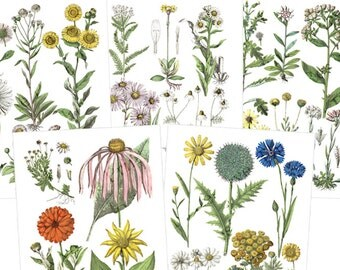 5 Scientific Prints Antique Wild Flower Drawings Printable Digital Download Floral Clpart Daisy Coneflower Bachelor Button