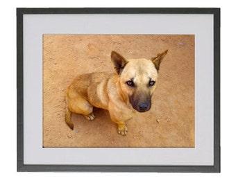 "Doi Suthep Dog - Framed and matted - 13"" x 17"""