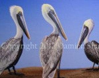 Three Pelicans Shell