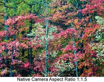 Colors of Autumn: Landscape art photography prints for home or office wall decor.