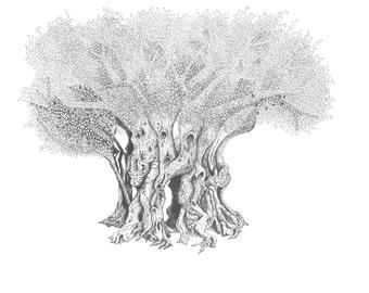 Olive Tree (7): Print of Original Pen & Ink Drawing
