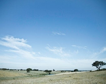 Landscape photography, wild when the Portugal Alentejo is similar to the African savannah #2. Landscape photography, wild Alentenjo