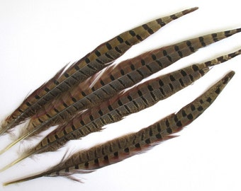 Real pheasant feathers