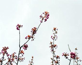 Blossom/Flower Photography