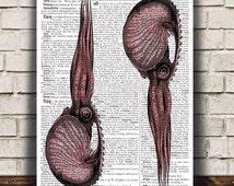 Nautical print Squid poster Beach house art Marine print RTA1085