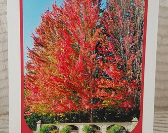 Colors of Fall Photo Greeting Card