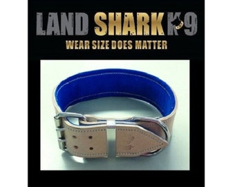 Rawhide Leather Dog Collar with Royal Blue Suede Padded Inner Lining 2 inch wide