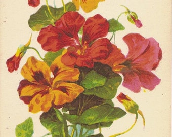 Bouquet of Nasturtiums