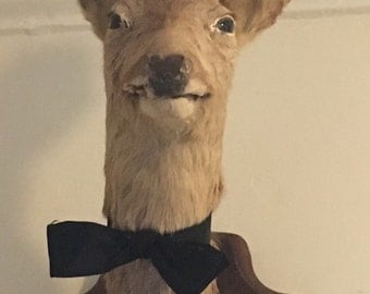 Taxidermy deer head mount with antlers and bow tie