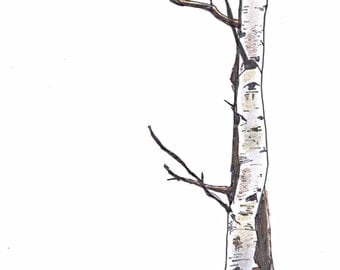 Aspen original colored pencil drawing