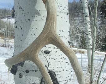 Large Deer Antler
