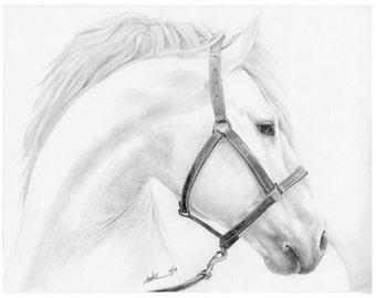 White Stallion (Mounted Print)