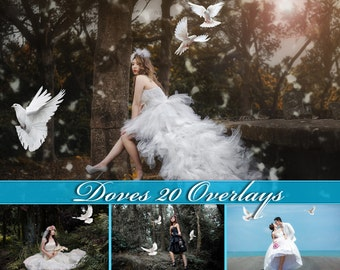 20 Doves Overlays Photoshop Overlays Doves Clip Art Doves Overlay Doves Clipart White Doves Overlays Pigeons Overlays Doves Photo Overlays