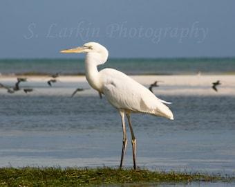 heron photography bird photography beach decor fine art photography beach photography florida keys nature photography wildlife photography