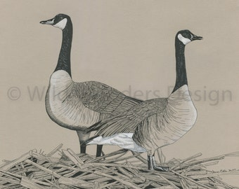 Canada Geese Ink Drawing Print