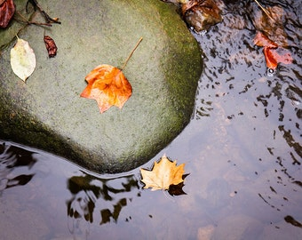 Photograph of Autumn Leaves on a River Rock